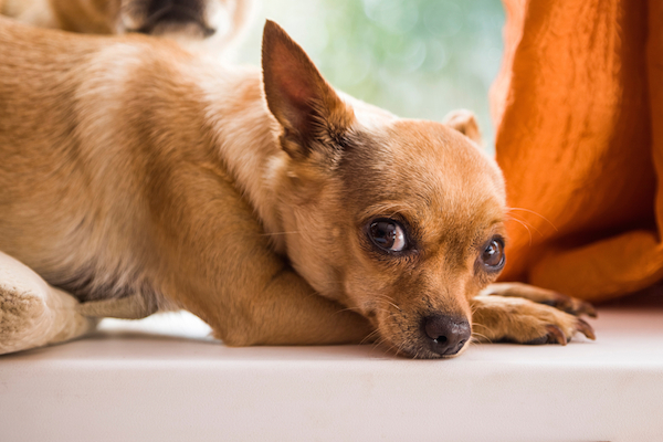 Abscesses In Dogs: Causes, Symptoms, And Treatments 2