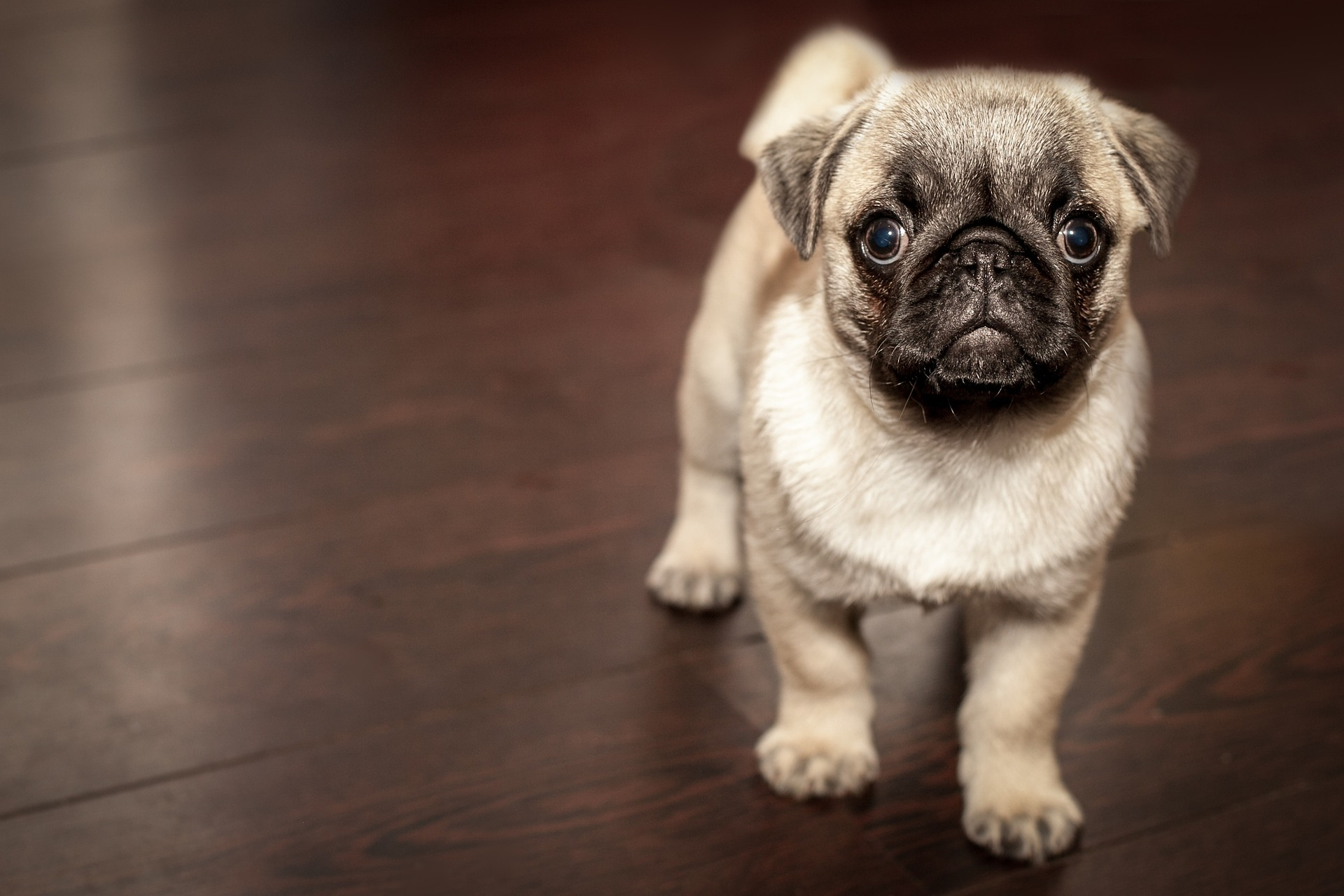 Puppy Food Advice: Puppy Food And How Much To Feed A Puppy 5