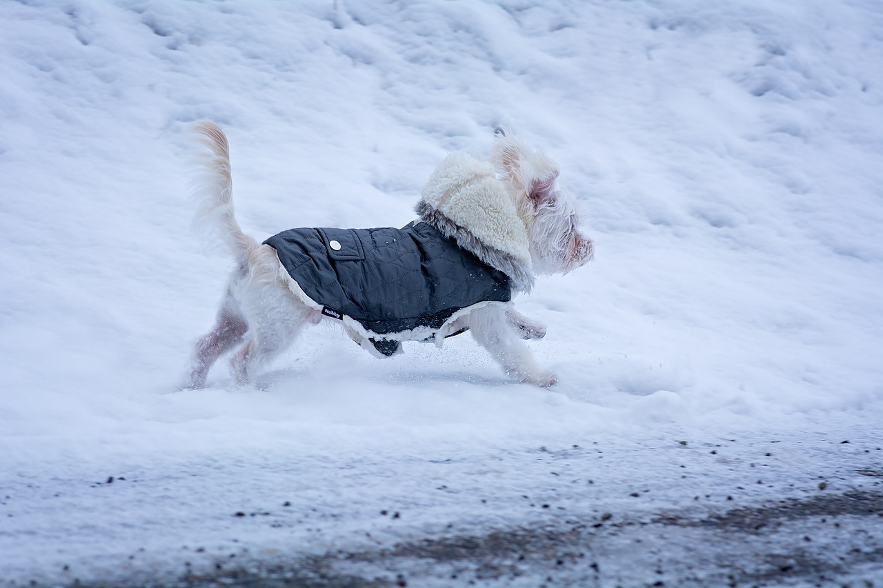 #WinterIsHere: Ways Cold Weather Can Affect Your Dog and How Cold is Too Cold? 1